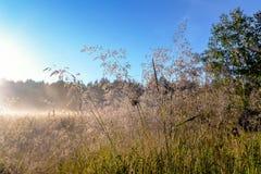Nascer do sol sobre um campo com orvalho Imagens de Stock Royalty Free
