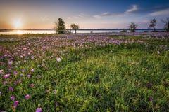 Nascer do sol sobre um campo do lago e do Wildflower imagem de stock royalty free