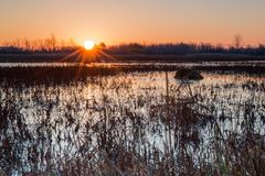 Nascer do sol sobre um pântano Fotos de Stock