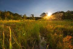 Nascer do sol sobre um pântano no parque nacional do Acadia Imagem de Stock Royalty Free