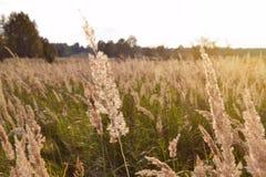Nascer do sol sobre um prado de florescência do verão Imagem de Stock