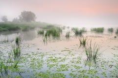 Nascer do sol sobre uma lagoa enevoada com lentilha-d'água Imagem de Stock