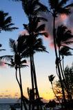 Nascer do sol tropical Fotografia de Stock