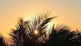 Nascer do sol tropical video estoque