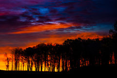 Nascer do sol vibrante da manhã Imagem de Stock