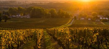 Nascer do sol do vinhedo no vinhedo do Bordéus, Gironda Imagens de Stock Royalty Free
