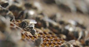 Nascimento da abelha vídeos de arquivo