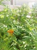Nascimento de uma flor foto de stock royalty free