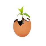 Nascimento do crescimento novo da vida Fotos de Stock