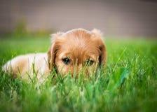 Nascondendosi nell'erba Fotografia Stock Libera da Diritti