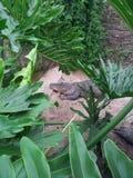 Nascondendosi nelle piante Fotografia Stock