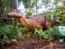 Nascondendosi in un modello dell'esposizione di tsintaosaurus del cespuglio nello zoo di Perth fotografie stock