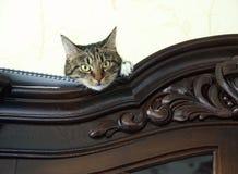 Nascondersi alto vicino del gatto su un armadietto che esamina spettatore con spazio per la pubblicità, foto artistica del gattin immagini stock libere da diritti