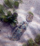 Nascondersi della tartaruga di muschio Immagini Stock Libere da Diritti