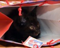 Nascondersi nero del gattino Fotografia Stock