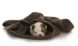 Nascondersi sveglio del cucciolo Fotografia Stock Libera da Diritti