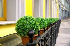 Nascondiglio-vaso con le piante Fotografia Stock