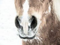 Nase und Nasenlöcher des Pferd 199 Lizenzfreies Stockbild