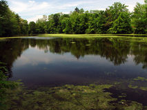 Nashawannuck, Easthampton Massacusetts. The nashawannuck pond in early summer, covered with pollen, the still water reflects the bank of trees in the background Royalty Free Stock Photography