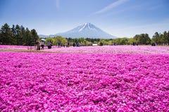 NASHIYAMA, JAPÃO 11 DE MAIO 2015: Os povos do Tóquio e as outras cidades ou o internatoinal vêm ao Mt Fuji e aprecia a flor de ce Fotografia de Stock