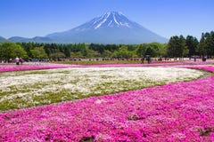 NASHIYAMA, JAPÓN mayo de 2015: La gente de Tokio y de otras ciudades viene al Mt Fuji y goza de la flor de cerezo en la primavera Fotografía de archivo