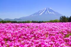 NASHIYAMA JAPAN Maj 2015: Folket från Tokyo och andra städer kommer till Mt Fuji och tycker om den körsbärsröda blomningen på vår Arkivbilder