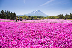 NASHIYAMA, JAPAN- 11 MAY. 2015: People from Tokyo and other cities or internatoinal come to Mt. Fuji and enjoy the cherry blossom Stock Photography