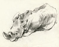 Nashorn, 2 zeichnend Lizenzfreie Stockfotografie