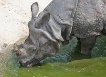 Nashorn. Lizenzfreie Stockfotografie