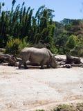 Nashorn-@ Auckland-Zoo Lizenzfreies Stockfoto