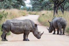 Nashorn-Straßensperre Stockbild