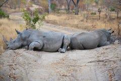 Nashorn-Straßensperre in Südafrika stockfotografie