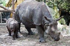 Nashorn und Baby Stockbilder