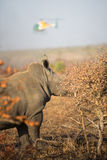 Nashorn und Hubschrauber Lizenzfreie Stockfotos