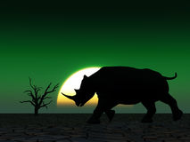 Nashorn-wild lebende Tiere 24 Lizenzfreie Stockfotografie