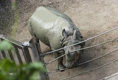 Nashorn am Zoo lizenzfreie stockbilder