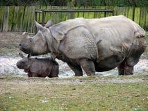 Nashornmutter mit neugeborenem Schätzchen Stockbilder