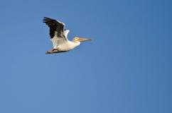 Nashornpelikan-Fliegen in einem blauen Himmel Lizenzfreie Stockfotos