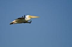 Nashornpelikan-Fliegen in einem blauen Himmel Stockbild