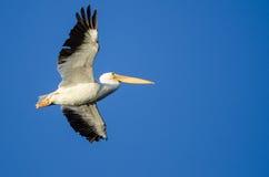 Nashornpelikan-Fliegen im blauen Himmel Lizenzfreie Stockbilder