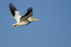 Nashornpelikan-Fliegen im blauen Himmel Stockfotos