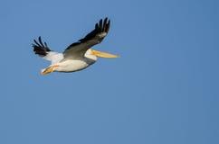 Nashornpelikan-Fliegen im blauen Himmel Lizenzfreies Stockbild