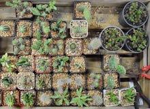 Nasieniodajna taca różnorodny kaktus dla czas wolny aktywności, domowego wystroju, ogrodnictwa lub sprzedawania, obrazy stock