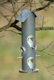 Nasieniodajny dozownik dla dzikich ptaków Zdjęcie Royalty Free