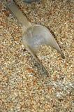 nasiona słonecznika Zdjęcia Stock