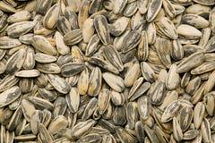 nasiona słonecznika Obraz Royalty Free