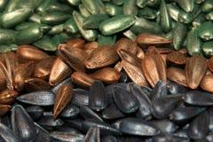 nasiona słonecznika zdjęcie royalty free