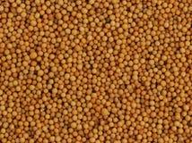 nasiona z musztardą zdjęcia stock