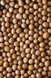 nasiona z musztardą Zdjęcie Royalty Free