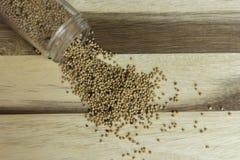 nasiona z musztardą Fotografia Royalty Free